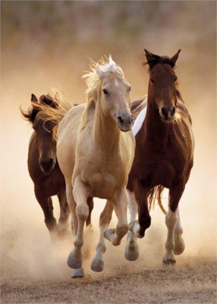 Puzzle CLEMENTONI 1000 dílků - Běžící koně