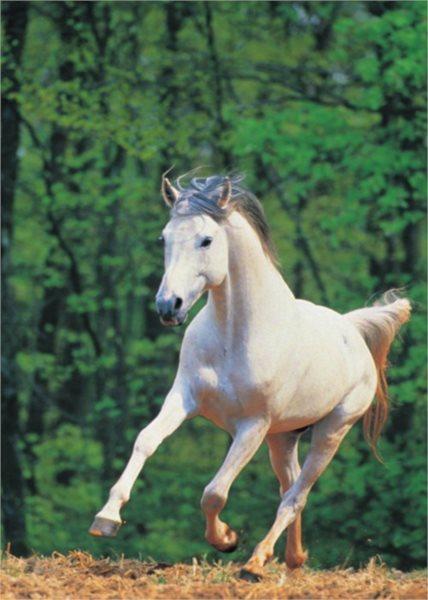 PARTY PUZZLE , CLEMENTONI Puzzle Bílý kůň 500 dílků