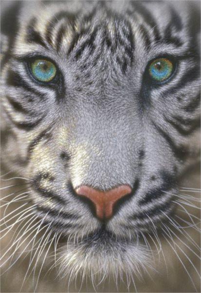 EDUCA Puzzle Bílý tygr 500 dílků
