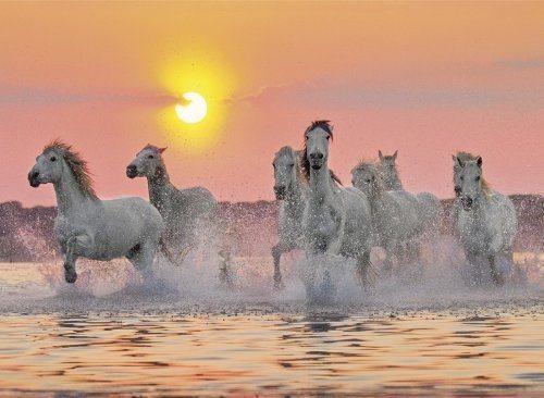 Puzzle CLEMENTONI 1500 dílků - Camargští koně