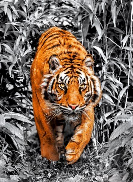 CLEMENTONI Metalické puzzle Tygr 1000 dílků