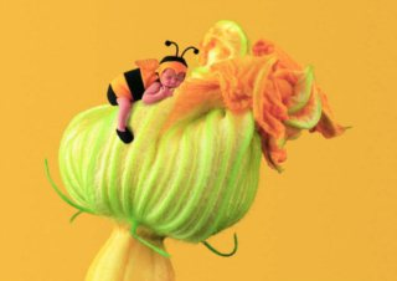 Puzzle SCHMIDT 1000 dílků - A.Geddes, Čmeláček na dýňovém květu