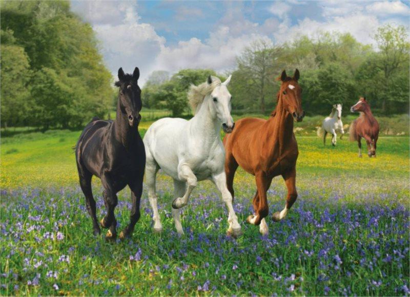 Puzzle CLEMENTONI 1000 dílků - Cválající koně