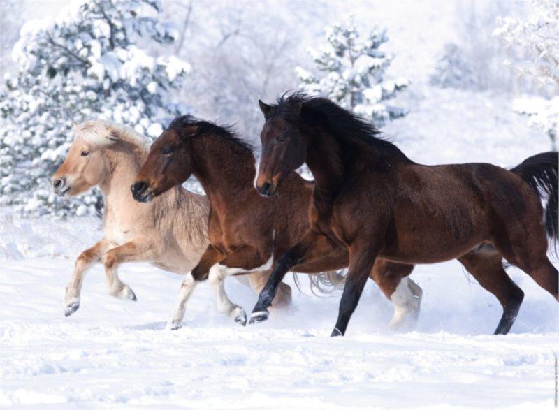 RAVENSBURGER Puzzle Cválání ve sněhu 500 dílků