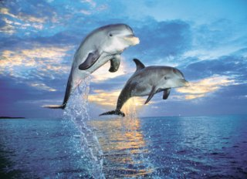 CLEMENTONI Puzzle Delfíni 500 dílků