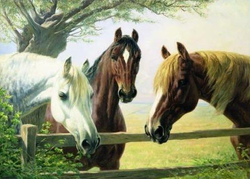 Puzzle 1000 dílků - Koně