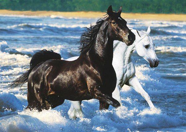 RAVENSBURGER Puzzle Koně na pobřeží 1500 dílků