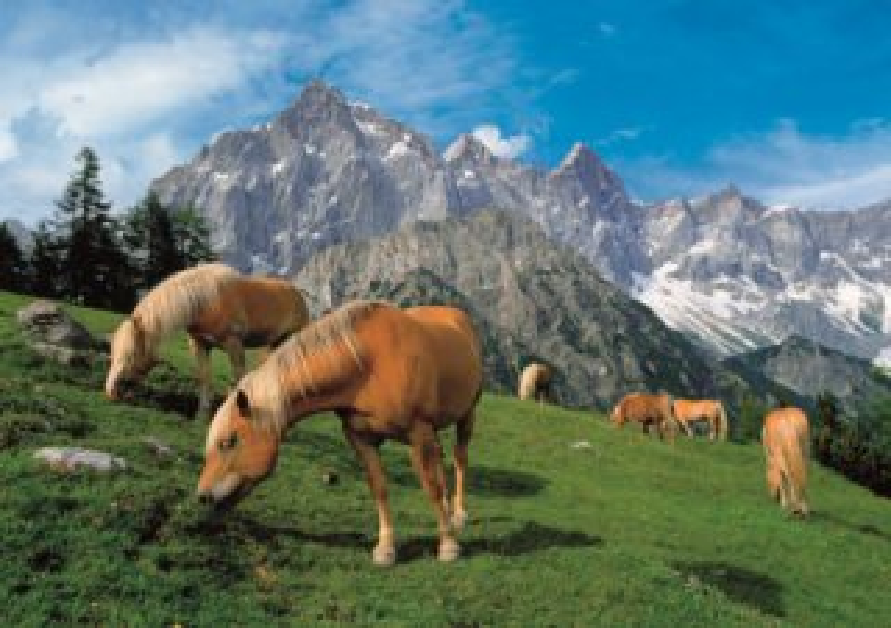 Puzzle DINO 1500 dílků - Koně v horách