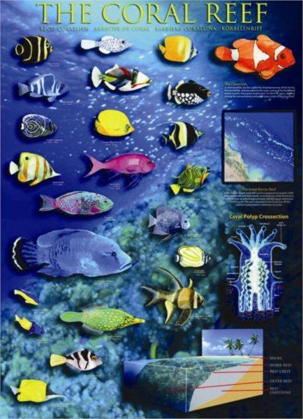 EUROGRAPHICS Puzzle Korálový útes 1000 dílků