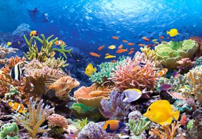 CASTORLAND Puzzle Korálový útes 1000 dílků