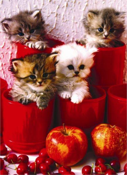 EUROGRAPHICS Puzzle Koťata v květináčích 1000 dílků