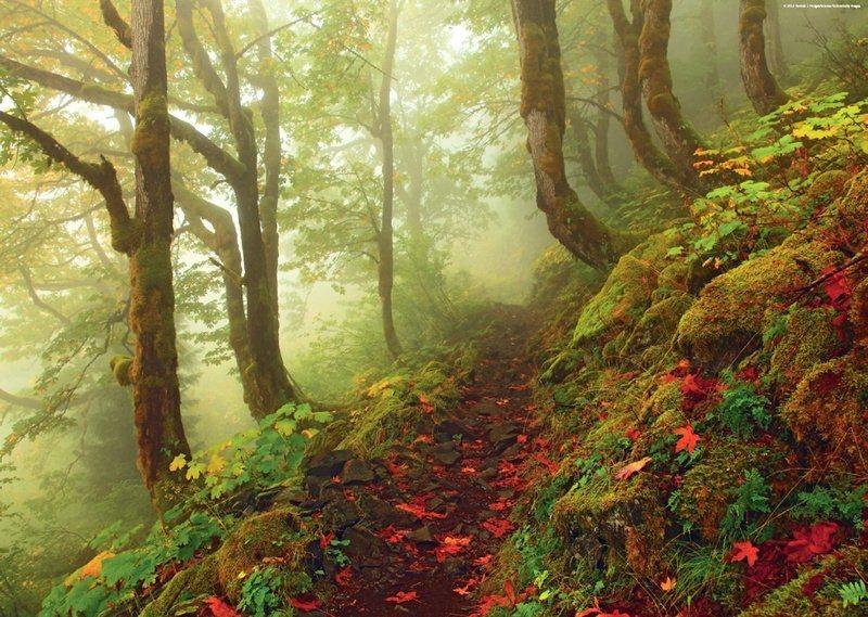 HEYE Puzzle Lesní cesta 1000 dílků