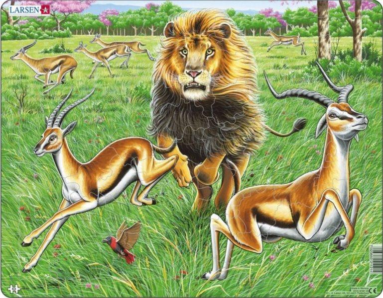 LARSEN Puzzle Lev na lovu gazel 63 dílků