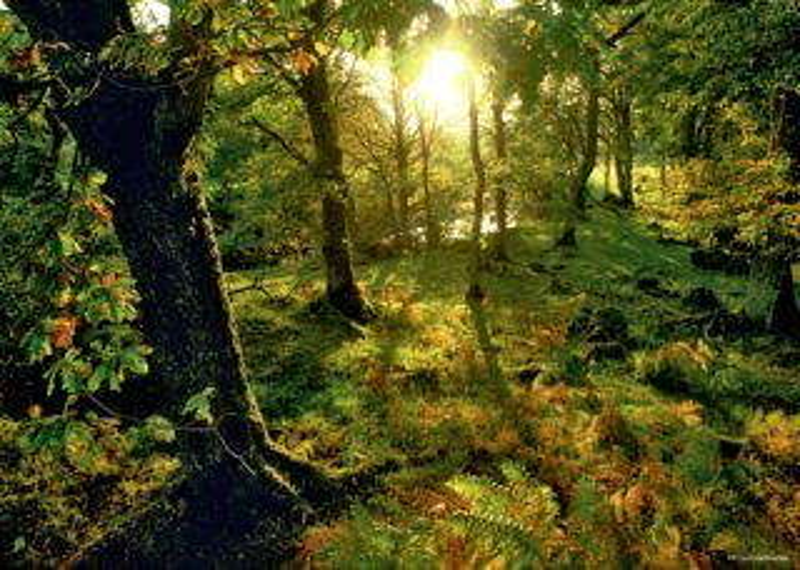 HEYE Puzzle Mýtina v lese 1000 dílků
