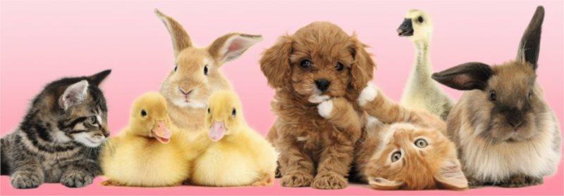 Puzzle RAVENSBURGER 500 dílků - Zvířecí přátelé