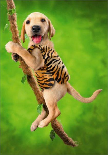 DINO puzzle 500 dílků - Pes akrobat