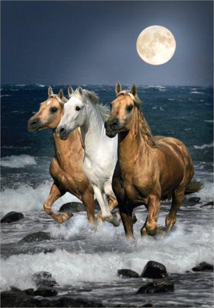 Puzzle CLEMENTONI 1500 dílků - Běžící koně