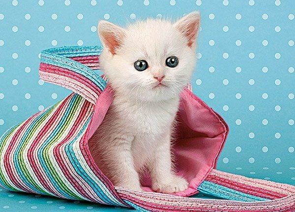 Castorland Puzzle 108 dílků- Bílá kočka v tašce