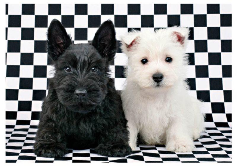 DINO Puzzle Černé a bílé štěně 500 dílků