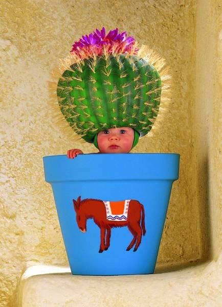 Puzzle SCHMIDT 57946 Kaktusový květináč 1000 dílků