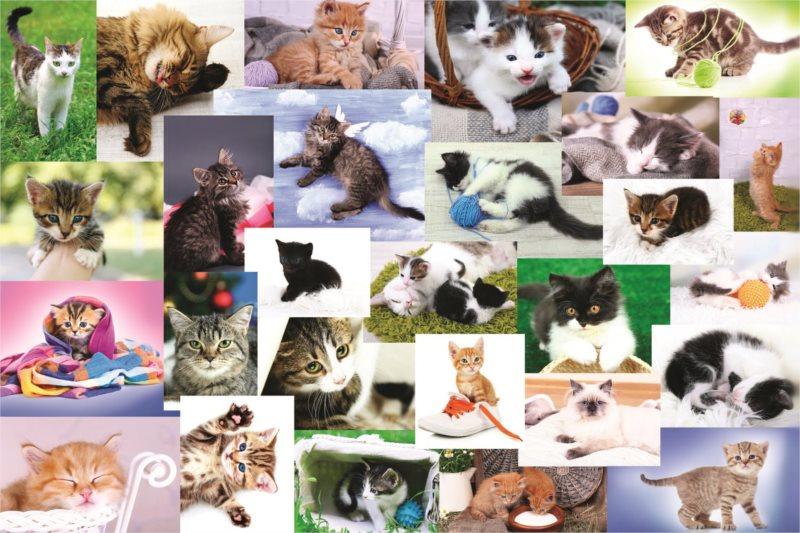 TREFL Puzzle Kočičí koláž 60 dílků