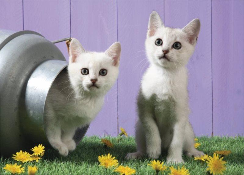 SCHMIDT Puzzle Kočičí sestry 500 dílků