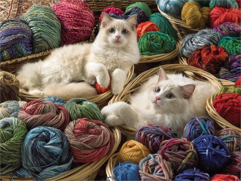 COBBLE HILL Puzzle Kočky ragdoll XL 275 dílků