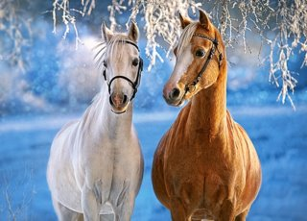CASTORLAND Puzzle Koně v zimní krajině 260 dílků
