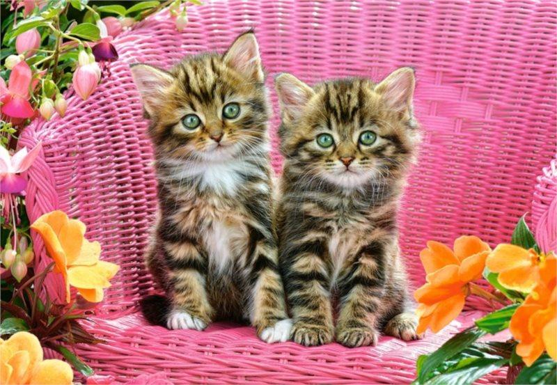 CASTORLAND Puzzle Koťata v zahradním křesle 1000 dílků