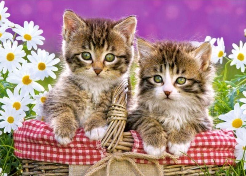 CASTORLAND Puzzle Koťata v košíku 120 dílků