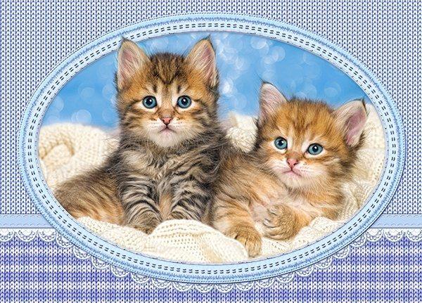 CASTORLAND Puzzle Koťata v pletené dece 120 dílků