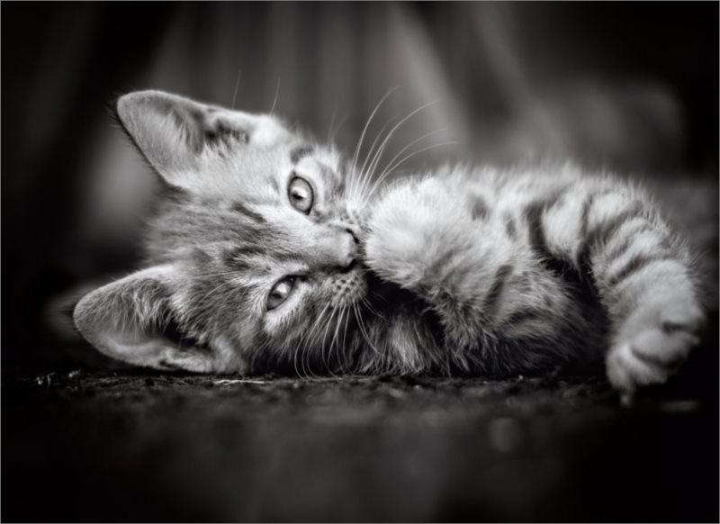 CLEMENTONI Puzzle Kotě 1000 dílků