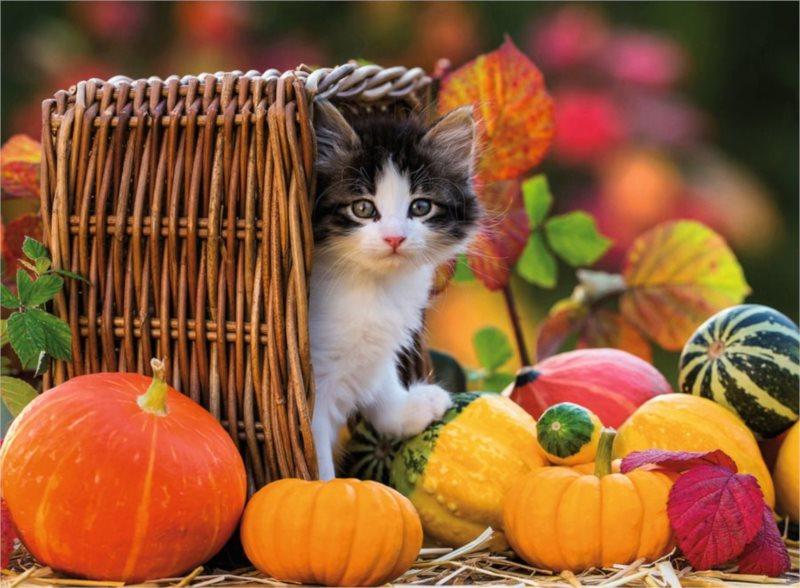 Puzzle RAVENSBURGER 500 dílků - Kotě na podzim
