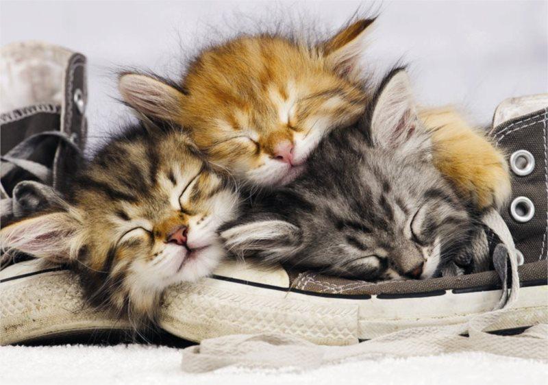Puzzle DINO 500 dílků - Kotě v Botě
