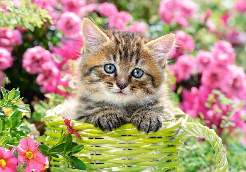 CASTORLAND Puzzle Kotě v květinové zahradě 500 dílků