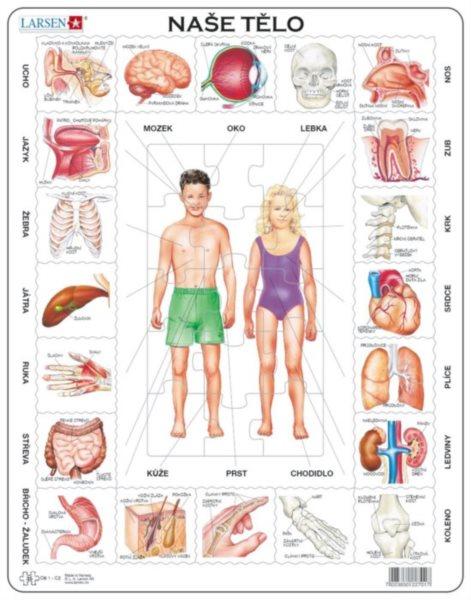 LARSEN Puzzle Lidské tělo 35 dílků