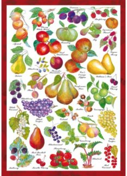 SCHMIDT Puzzle Ovoce 1000 dílků