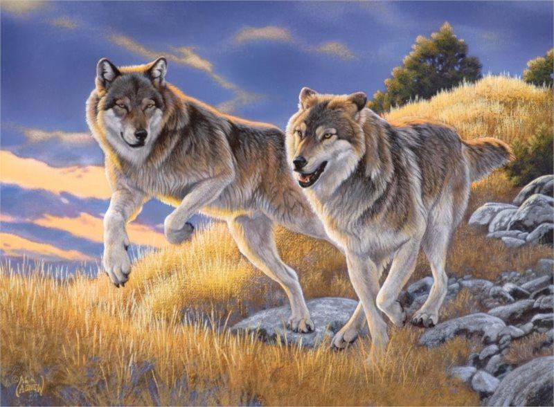 CLEMENTONI Puzzle Pár vlků 500 dílků