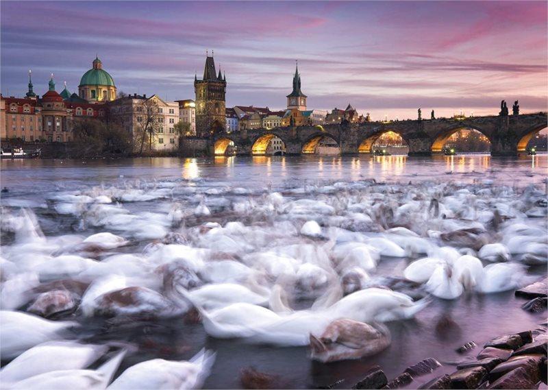 SCHMIDT Puzzle Praha: Labutě na břehu Vltavy 1000 dílků