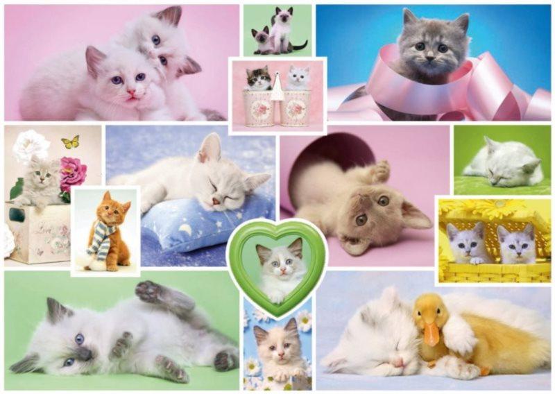 Puzzle SCHMIDT 1000 dílků - Přítulné kočky