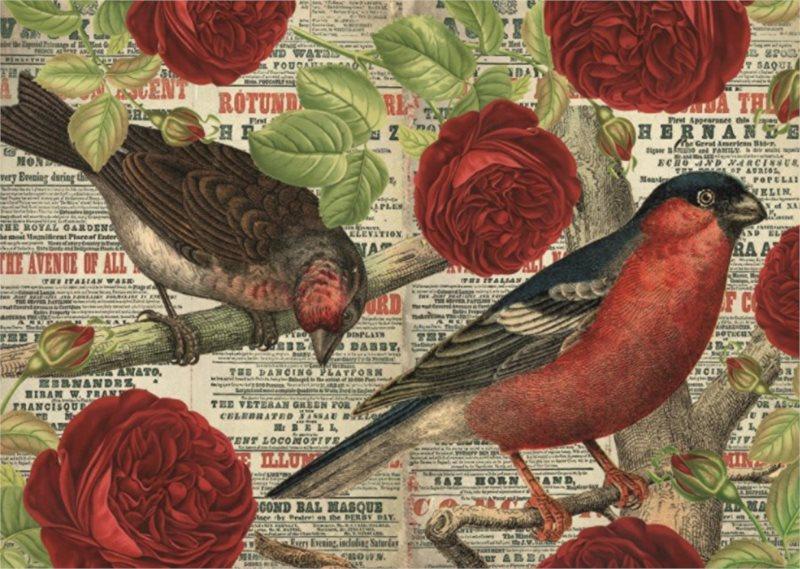 JUMBO Puzzle Ptáci milují květiny 500 dílků