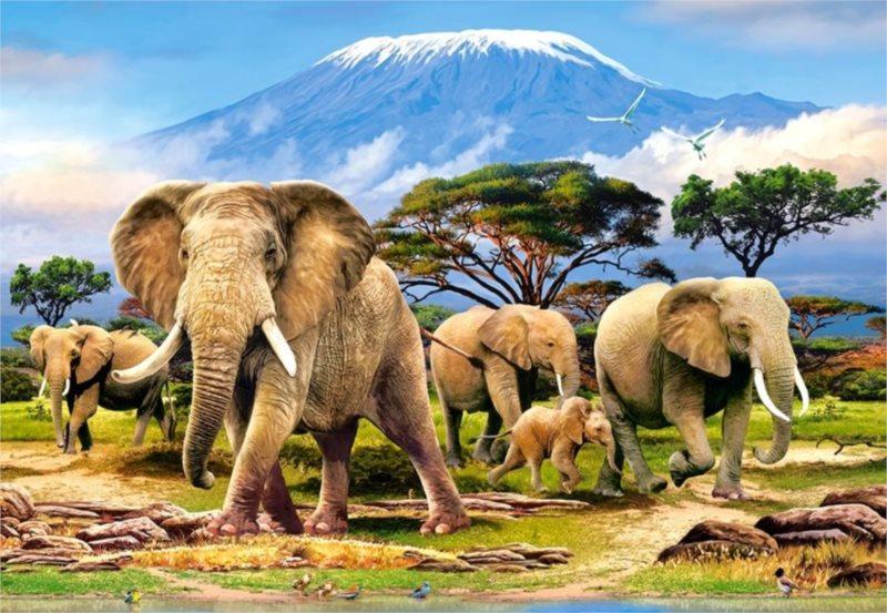 Puzzle CASTORLAND 1000 dílků - Ráno pod Kilimandžárem