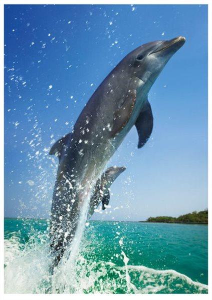 DINO Puzzle Skákající delfín 500 dílků