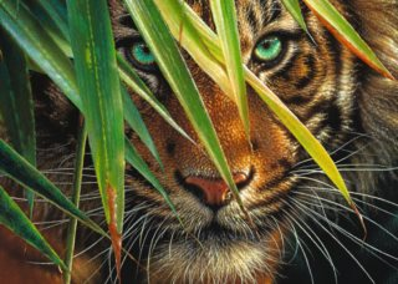Puzzle RAVENSBURGER 1000 dílků - Tajemný tygr