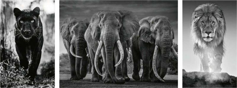 RAVENSBURGER Puzzle Triptych: Panter, sloni, lev 1000 dílků