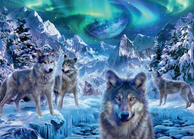 JUMBO Puzzle Zimní vlci 500 dílků