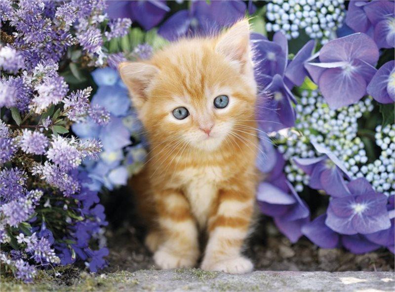 CLEMENTONI Puzzle Zrzavé kotě v květinách 500 dílků