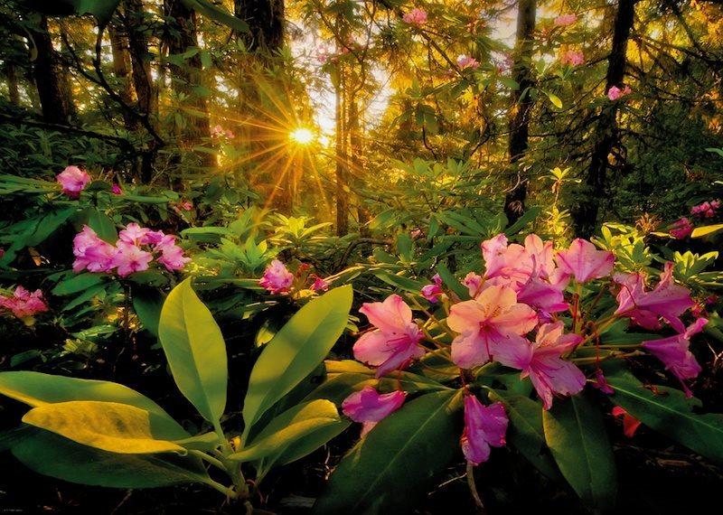 HEYE Puzzle Rododendron 2000 dílků
