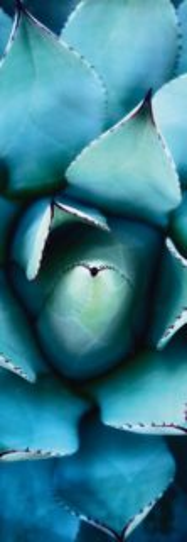 Vertikální puzzle SCHMIDT 1000 dílků A. Shapiro: Modrá echevérie
