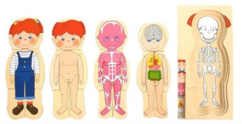 TOP BRIGHT Vícevrstvé puzzle Lidské tělo Holčička